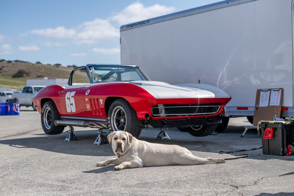 1965 Chevrolet Corvette guard dog